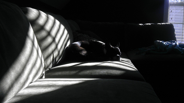 Random Photo of My Boston Terrier, Vol Four