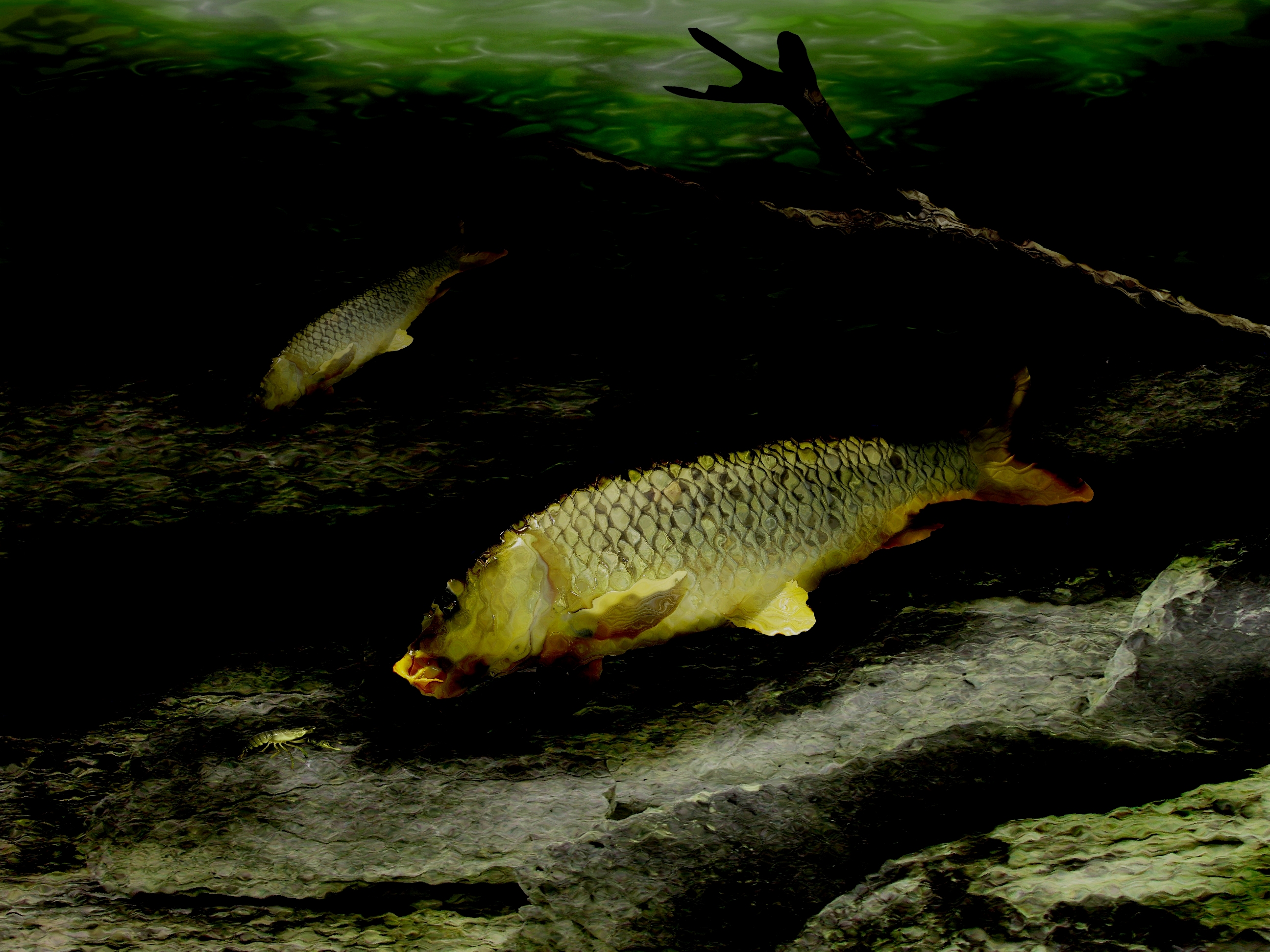 Carp on the Rocks