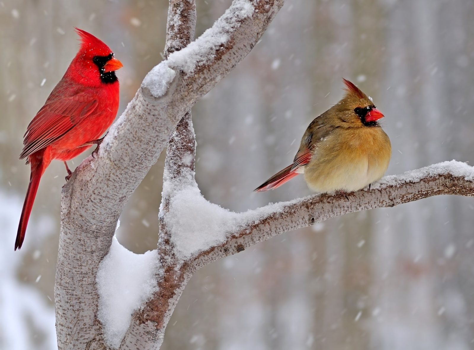 Attracting & Photographing Songbirds