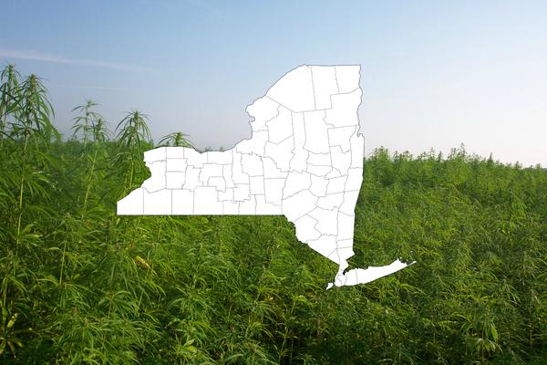 New York State Now Awards Unlimited Participants With The Industrial Hemp Processing Grant
