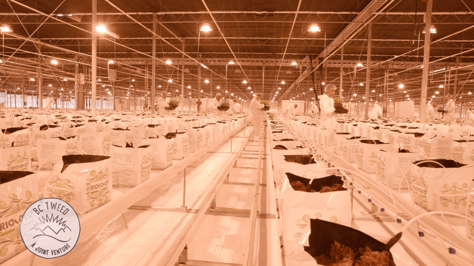 Canadian Company Secures Cultivation License for 1.3 Million sq. ft. of Production
