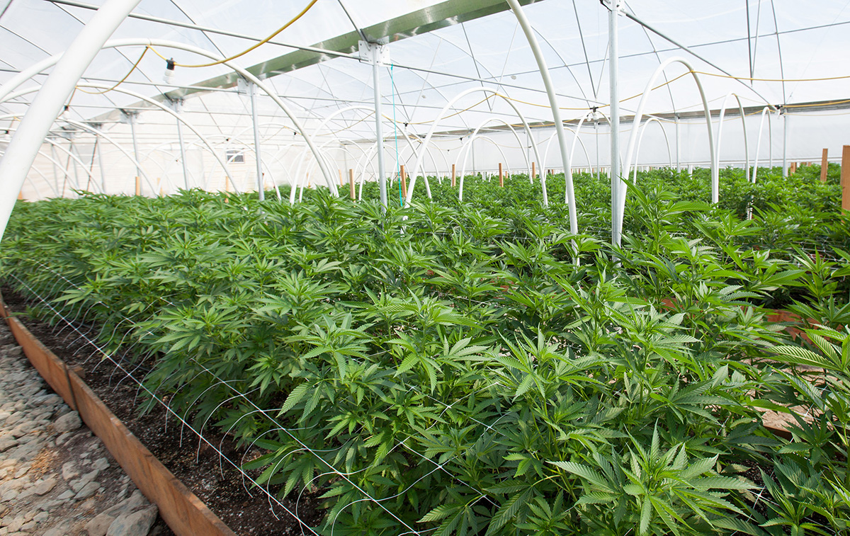CannTrust Holdings Receives Sales License for 250,000 sq. ft. Greenhouse Facility