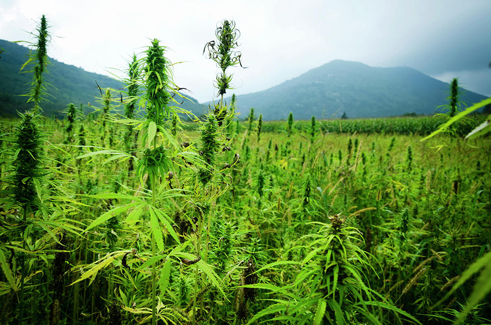 The Industrial Hemp Farm Bill of 2018 Could Ease Regulations for CBD Companies