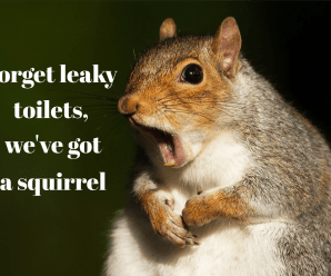 Forget leaky toilets, we've got a squirrel!