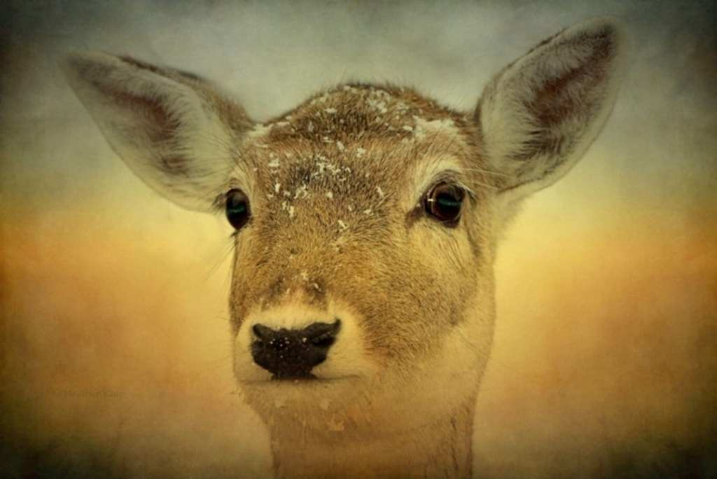 wildlife, nature, deer, fawn, animallove, animal photo, SmileMakers