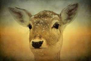 wildlife, nature, deer, fawn, animallove, animal photo, SmileMakers