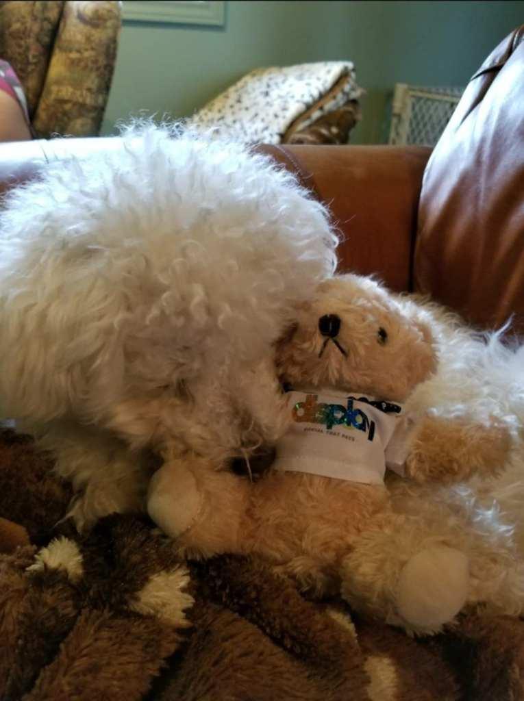 Display Bear and puppy einstein cuddles