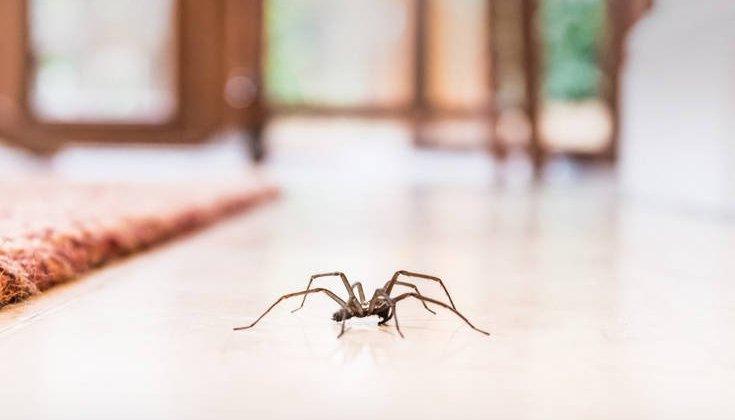 Απαλλαγείτε από τις αράχνες στο σπίτι