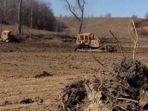 Here, the bulldozer is pushing aside one of the removed stumps.  Eventually, what will not burn will be buried on site.  You can see in the foreground a small preview of how the field will look when this work is complete.  There will be beautiful corn growing there this summer!
