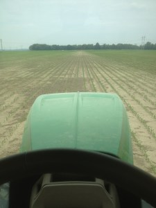 This was John's view as he guided the 9360R and the 2510H applicator through some standing corn at Freddie.  He is 'sidedressing' the nitrogen...feeding the corn.