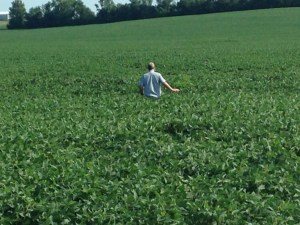 John inspects the soybeans at the Roberson farm location.  He says we can pass on a herbicide application at this time.  These soybeans are Asgrow AG3731, and have good height and have set pods well. This makes us hopeful for harvest time.