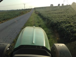 """Working between the soybeans and the road at the Steen Hill field.  This is the """"before"""" picture."""
