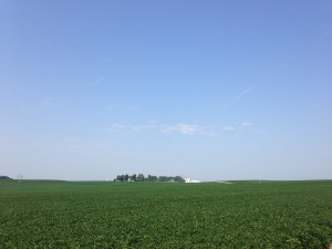August 1, 2014. The soybean crop at the home farm looks as good as it ever has. We're grateful, and hopeful for harvest time.