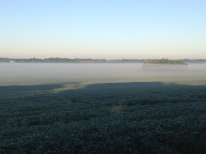 Fog again this morning wraps the valleys in gauze-like obscurity