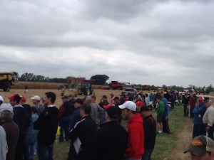 The combines are lined up, about to begin their work.