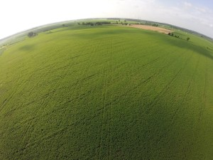 Here is one of the still photos from Burke.  The soybean rows and sprayer track run vertically through the picture, while the effects of last fall's drainage tile install run from lower left to upper right.   This picture provided the 'happy news'.  that the beans survived the heavy, heavy rain.