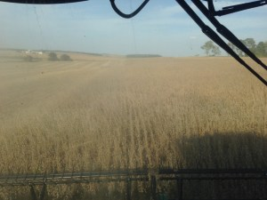 From high atop the hill at Dunn, the soybeans are cutting well this day.