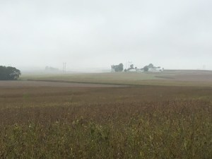 Looking west today, we see a foggy, gray, wet day.