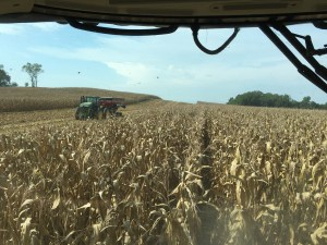 Early this morning, before the rain clouds rolled in, the corn harvest was working quite nicely on this hill