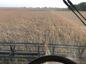This was the view on Saturday evening as we cut soybeans at the Newman farm near Wheatland