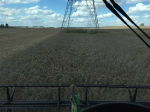 This was my view from the JD S680 combine yesterday afternoon at the Steen Hill farm