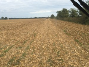 Here, we are driving across the south end rows of the main field at Burke. We're headed to the east field, across Petersburg road. Those 11 acres were the last ones of #harvest16