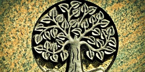El árbol de Adán_ Casi literal