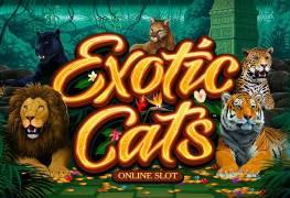 Exotic Cats Slot - игровой слот от Microgaming. Отзывы, обзор игрового автомата, процесс игры видеослота Экзотические Кошки от Микрогейминг. Бонус и регистрация!