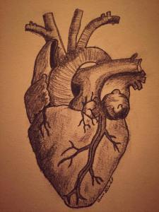 drawing of heart, anatomical