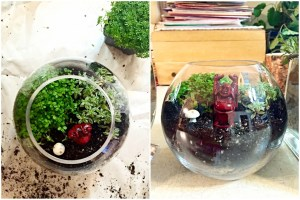 finished terrarium