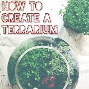 how to terrarium