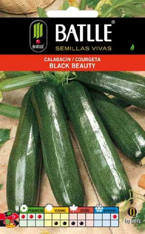 CALABACIN BLACK BEAUTY