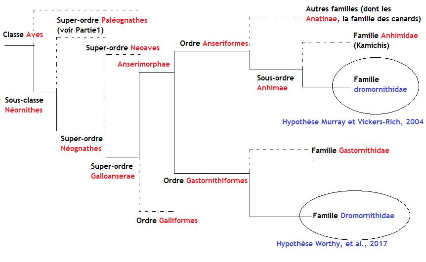 Phylogénétique Dromornithidae
