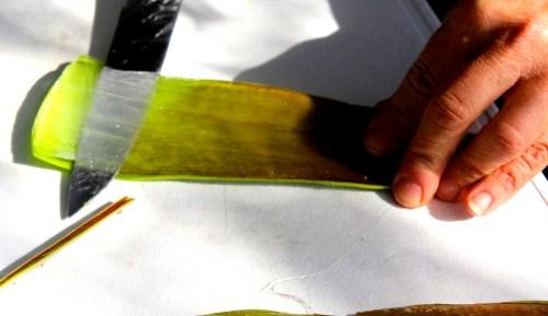 Filetschnitt Aloe