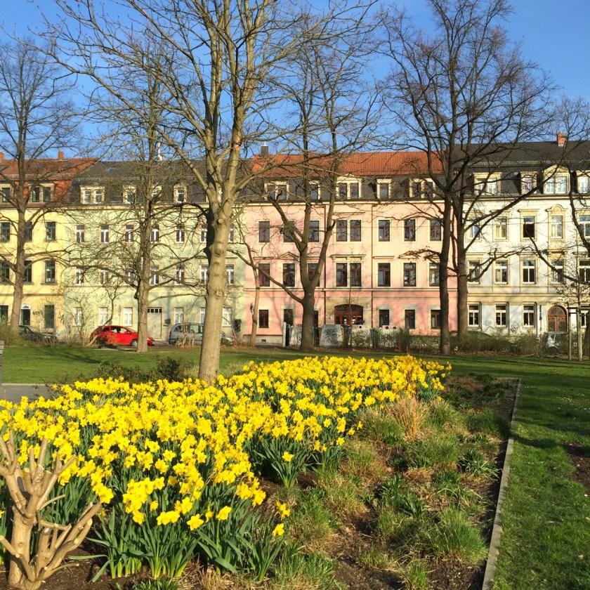 Narzissenpracht Neustadt
