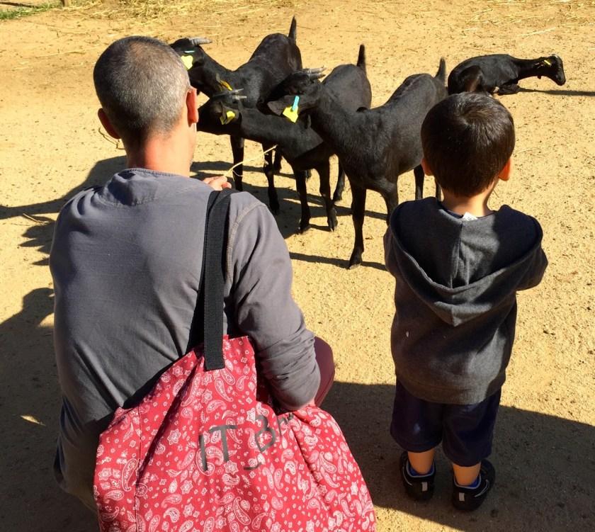 Ziegen und Kind Mas Salagros casowi