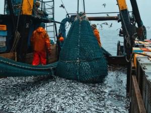 В Дагестане на 30 процентов выросли уловы каспийской рыбы