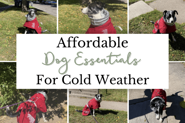 Affordable Cold Weather Dog Essentials   Best Dog Cold Weather Supplies