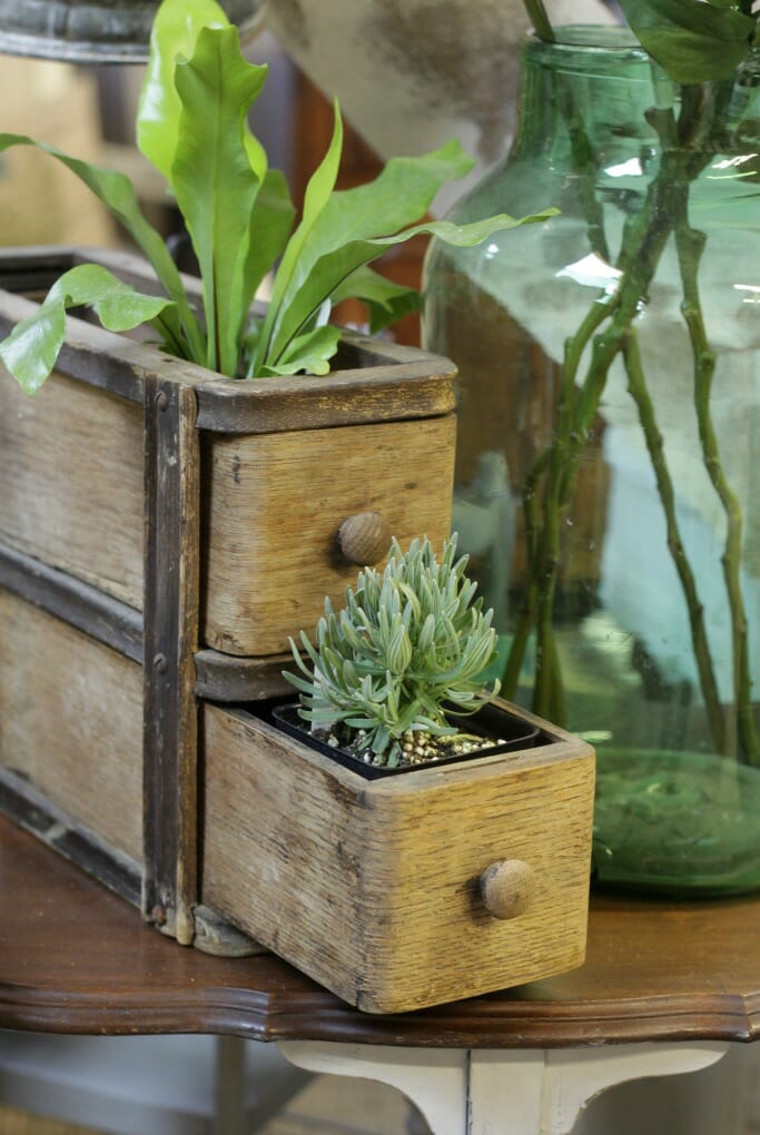 Plants in Sewing Drawers
