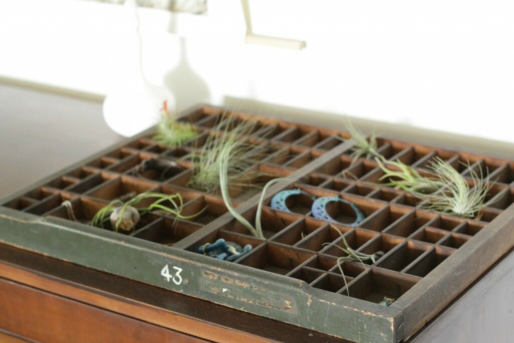 Printers Tray with jewelry and air plants