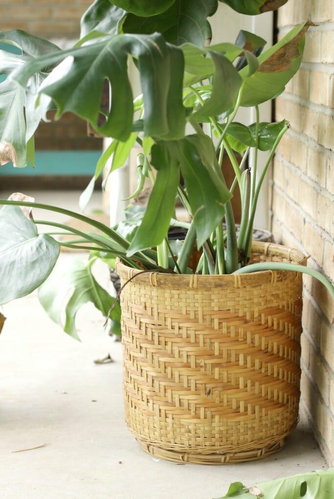 Thrifted Basket Planter