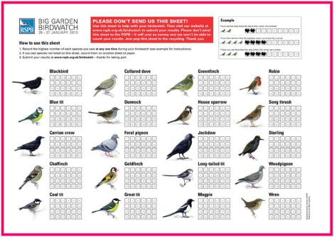 rspb big garden birdwatch print sheet