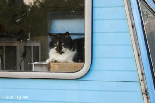 adopting cats-5