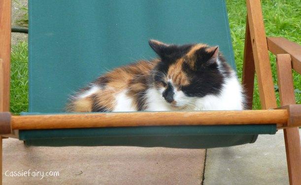 cats can sleep anywhere - wheres the weirdest place you can sleep