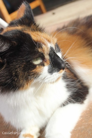 tips for keeping your cat healthy