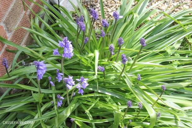 garden spring flowers_-3