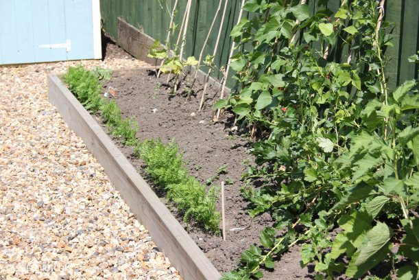allotment summer garden veggie patch runner beans-4