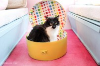 Hat Box Cat Bed DIY