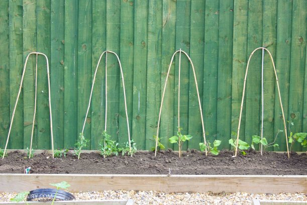 summer garden veggie patch runner beans-2