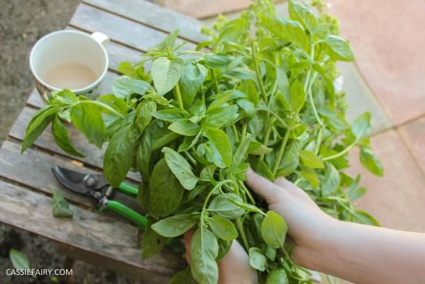 pieday friday diy homemade pesto basic recipe garden produce veggie patch meal dinner-2